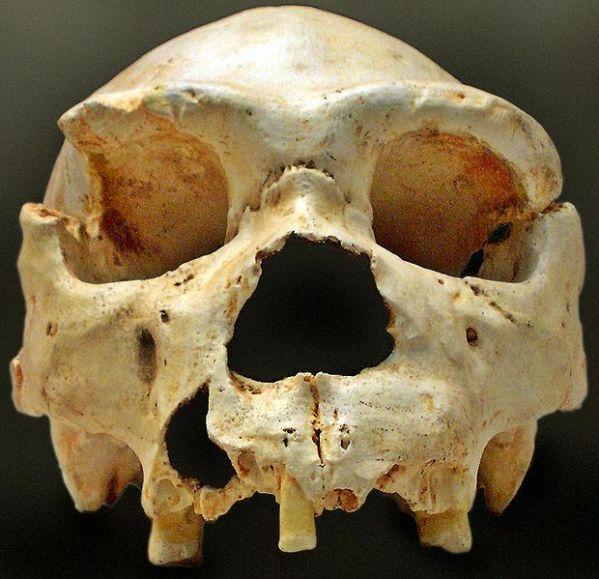 restos fósiles homo heidelbergensis atapuerca