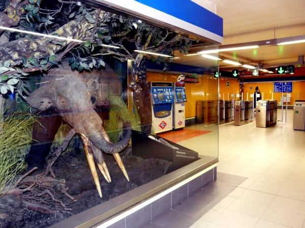 Fósiles del yacimiento del metro de Carpetana de Madrid